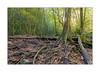 Devil's Fork Trail (Carlyle Ellis Photography/Human Quotient) Tags: autumn devilsbathtub fall hiking longexp nina rockformations waterfalls landscapephotography landscape virginia