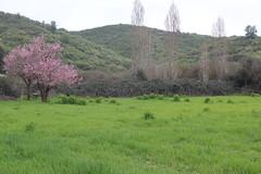 Paisaje durazno (kokesheep) Tags: durazno campo árbol pasto