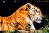 Just like Animals (Francesca Cavallo Photography) Tags: animal animals animalkingdom nature natura animali wild regnoanimale animaladdiction feline felini felino mammifero mammiferi parcodellecornelle