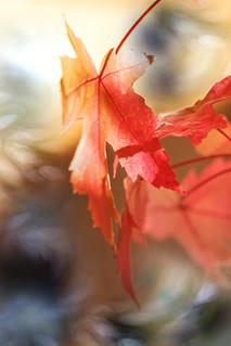 Cantique d'automne...