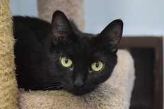 Aries - 1 year old spayed female