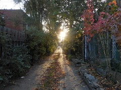 Morning Alley Dog Walk (navejo) Tags: montreal quebec canada alley sun leaves fence dogwalk