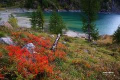 Mirtillandia (stefano.chiarato) Tags: mirtillo rosso lago lagodeicavalli valleantrona acqua reflections autunno autumn italy piemonte pentaxart pentax pentaxlife pentaxk70