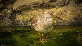 Bird -(3819)