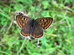 Butterfly 1448 (+780000 views!) Tags: butterfly borboleta farfalla mariposa papillon schmetterling فراشة