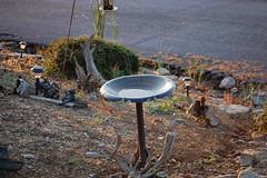 Bird Bath. (dccradio) Tags: bland va virginia blandcounty outdoors outside birdbath pavement bush driftwood ground shrub light nikon d40 dslr