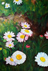 The Daisies (cernaovec) Tags: painting acrylics canvas art acrylicpaint acrylicpainting artists originalart garden season blooming nature flowers flower green white outdoor daisy daisies