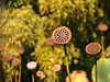 P1010195 (karsheg) Tags: fallfoliage autumn art gardens groundsforsculpture gfs newjersey nature outdoors