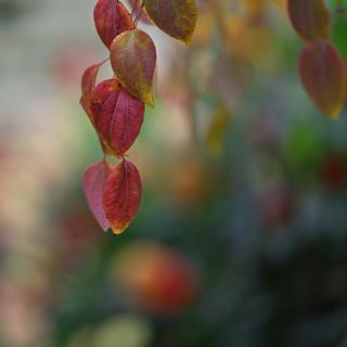 Autumn leaves (Explored)
