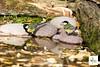 Cince_0612 (Oasi San Daniele Foto) Tags: birds oasisandaniele oasi verdone volo sanzenonedegliezzelini scoiattolo sciurusvulgaris becco natura lui fauna robin parconaturale pettirosso picchiomuratore scricciolo cinciarella cinciallegra rampichino fringuello