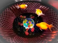 Art aquarium 2017 (wondering.zosan) Tags: aquarium artaquarium goldfish fish marinemuseum