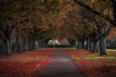 DSC_985322 (kapper22) Tags: taunton autumn fall park