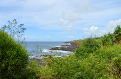 Ocean shore (*~Dharmainfrisco~*) Tags: dharma dharmainfrisco kauai hawaii island beach paradise ocean sea rocks green tropical travel tour 2015 usa