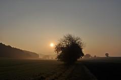 Novembermorgen (Uli He - Fotofee) Tags: ulrike ulrikehe uli ulihe ulrikehergert hergert burghaun nikon nikond90 fotofee plätzer meinweg nebel november morgensonne sonne sonnenlicht warmeslicht sonnenschein bäume feld felder licht schatten