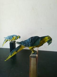 Guacamayo azul y amarillo - Quentin Trollip