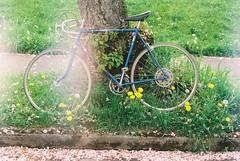 Rest (Caroline Kutchka Folger) Tags: flowers spring blossom rip fallenfriend bicycle flower peace appleblossom cherryblossom pink portland northportland 35mm film analog scanfromfilm lightleak dandelion