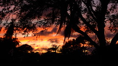 October Fifth Sunset (Jim Mullhaupt) Tags: sunset sundown dusk sun evening endofday sky clouds color red gold orange pink yellow blue tree palm outdoor silhouette weather tropical exotic wallpaper landscape nikon coolpix p900 bradenton florida manateecounty jimmullhaupt cloudsstormssunsetssunrises photo flickr geographic picture pictures camera snapshot photography nikoncoolpixp900 nikonp900 coolpixp900