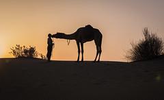 Rajasthan - Jaisalmer - Desert Safari with Camels-59