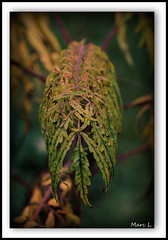 Dôme d'automne (Marc Lacampagne) Tags: dof canon eos dslr 90mm automne feuille ngc nature couleurs flickersbest