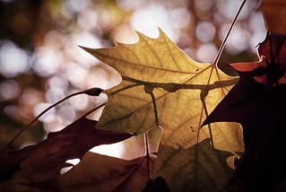 En busca del otoño perdido.
