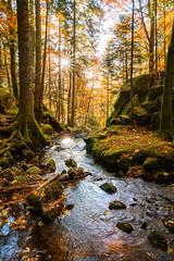 France Alsace 2017 - Autumn (cesbai1) Tags: france alsace elsass frankreich fr grand est forêt wald forest automne fall autumn river rivière wormsa vallée de la metzeral mountain orange