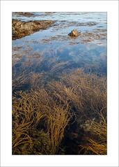 Seaweed - v (Steve-T201) Tags: intimatelandscape seaweed falmouth cornwall sea