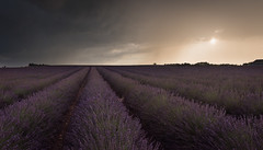 Sunset Panorama (MrBlackSun) Tags: lavender lavenderfields nikon d810 provence landscape scenery rain shower under storm sunset