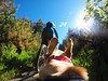 Fetch Mount (Wozza_NZ) Tags: mountainbike bike trail traildog dog gopro fetch harness singletrack cycling dogwalk pov ears labrador spanador cute dogcam summer upperhutt tunnelgulley nz newzealand mtb