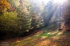 Simply autumn (Anteriorechiuso Santi Diego) Tags: ray rayoflight autumn nature simply