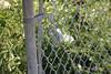 IMG_0230 (Locoponcho) Tags: burlington ontario rbg royalbotanicalgardens botanicalgarden train rail railway railroad cn cnr cnrail cnsnake