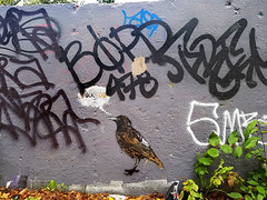 F*** You Bird (Fred:) Tags: graffiti halifax wall mur bird oiseau novascotia tags tagging muret speech talk bubble sparrow sparrows moineau moineaux oiseaux fuckyou fuck you profanity vulgar obscene angry birds streetart nova scotia urban street art urbain paint painted