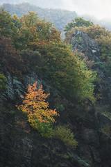 Autumn beauty. (kolja_wi) Tags: sony a6000 sunrise autumn color sun ray tree forest rock early morning light mood moody germany eifel mountain deutschland blue orange yellow green black warm sel55210