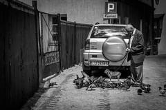 (mikper) Tags: lublin man dog birds feeding polen poland lubelskie pl
