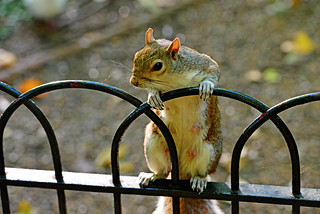 NAUGHTY SQUIRREL
