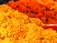 LR-013 (hunbille) Tags: india mumbai birgittemumbai32015lr dadar phool galli phoolgalli flower market bazaar bombay