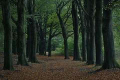 (Uno100) Tags: veluwe hoog buurlo schaapskooi bos forest netherlands green paddestoel mushroom