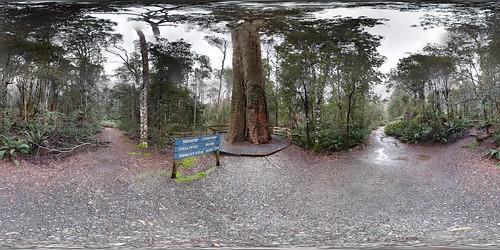 Liffey Falls Park