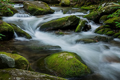 6 TS A O17 9076 (Carolina explorer photographer) Tags: charleshardin charleskhardinphotography greatsmokymountainsnationalpark mountainstreams mountainsoftennessee outdoors outdoorsphotography httpswwwfacebookcom httpswwwflickrcomphotos51814359n06