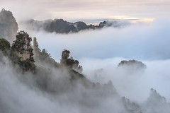 *Zhangjiajie National Park @ Sunrise in the fog* (albert.wirtz) Tags: albertwirtz china fairylady rockfigures rocks rockformations natur nature landscape landscapephotography asien asia fog mist nebbia niebla nebel brume brouillard bruma sky forest wood sunrise sunriseinfog mystsunrise mysterious twilight goldenhour goldenestunde tree bäume zhangjiajienationalforestpark zhangjiajie nationalpark jamescameron avatar soft softlight dezenteslicht softcolors hunan tianzi fairydispersionflowers berge mountains karst karstmountains karstberge landschaftsfotografie