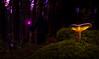 Wizard (Eifeltopia) Tags: halloween wizard mushroom pilz light wand sorcery costume forest blackwidow autumn fall darkness tales wisdom frightnight october alchemy conceptual magier wizardry druids sorcier aragnée bosque feartober ephemeral deepinthewoods fungus moss eifel südeifel wald sundown ancient enchanted spider macro delight magic welded magicwand fellows companion robe sculpture spinne zauberlehrling zauberstab
