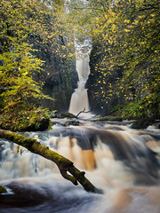 Autumnal Catrigg (matrobinsonphoto) Tags: catrigg force falls water fall waterfall river stream beck creek log trunk branch autumn autumnal trees tree seasonal countryside landscape outdoors north yorkshire dales national park uk british great britain english england scenic beautiful flood flooded spate ribblesdale
