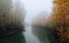 A Part Of Us (John Westrock) Tags: nature autumn fall trees river fog foggy washingtonstate pacificnorthwest canoneos5dmarkiii canonef2470mmf28lusm
