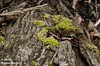 Life of the Fallen (Photos by Kieren Barnett) Tags: moss tree rotten dead fallen forest growth nature leaves brown green sticks nikon d7000