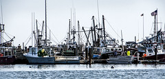 Fleet (PAJ880) Tags: fishing fleet provincetown harbor macmillan wharf ma cape cod industry history