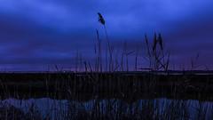 Crépuscule aux cabanes (Fred&rique) Tags: lumixfz1000 photoshop raw crépuscule roseaux étangs hérault salaison eau reflets nature paysage