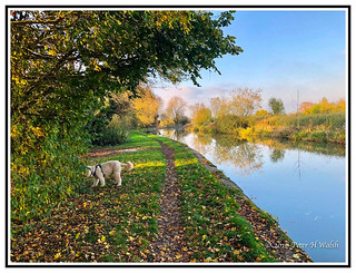 Nature - England - A Sunny Autumn Day by the Canal in Milton Keynes.