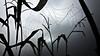 sparkling (camerito) Tags: cowbew spider´s web spinnenetz silhuettes umrisse pers water drops perlen wassertropfen foggy neblig camerito unlimitedphotos flickr goldcollection twb