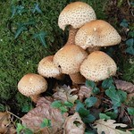 Fungi. thumbnail