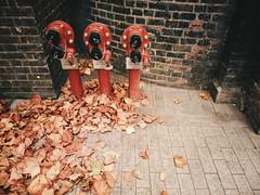 Shoot where you go #3 (LauraKiora) Tags: bloomsbury phonecam london stormophelia
