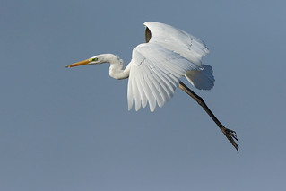 White in flight b